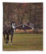 Brown And White Horse Fleece Blanket
