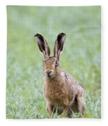 Brown Hare Fleece Blanket