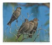 Brown-headed Cowbirds Fleece Blanket
