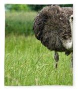 Browsing Ostrich Fleece Blanket