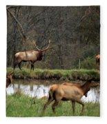 Buck In Wilderness Fleece Blanket