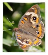 Buckeye Butterfly Square Fleece Blanket