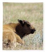 Buffalo Calf Fleece Blanket