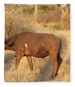 Buffalo Crossing Fleece Blanket