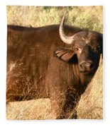 Buffalo Encounter Fleece Blanket