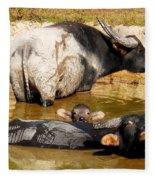 Water Buffalo Family Portrait Fleece Blanket
