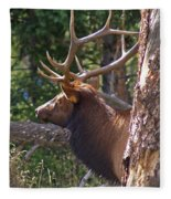 Bull Elk 2 Fleece Blanket