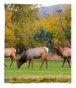 Bull Elk  Bugling With Cow Elks - Rutting Season Fleece Blanket