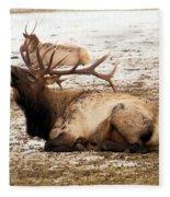 Bull Elk Calls Out Fleece Blanket