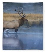 Bull Elk Crossing The Madison River Fleece Blanket