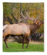 Bull Elk In Rutting Season Fleece Blanket