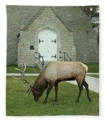 Bull Elk On The Church Lawn Fleece Blanket