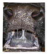 Bull Nose Fleece Blanket