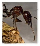 Bullet Ant Fleece Blanket