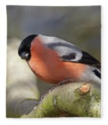 Bullfinch Fleece Blanket