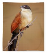 Burchell's Coucal - Rainbird Fleece Blanket