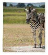 Burchell's Zebra On Grassy Plain Facing Camera Fleece Blanket