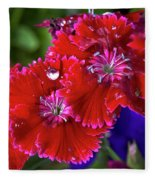 Burgandy Red Dianthus Fleece Blanket