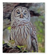 Buschman Park Owl Fleece Blanket