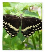 Butterflies Live - 8 Fleece Blanket