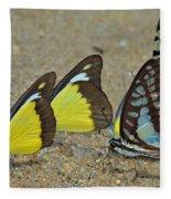 Butterflies Puddling Fleece Blanket