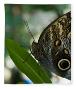 Butterfly Sitting Fleece Blanket