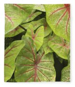 Caladium Leaves Fleece Blanket