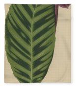 Calathea Zebrina, Maranta Zebrina Fleece Blanket