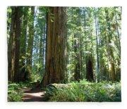 California Redwood Forest Trees Art Prints Fleece Blanket