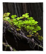 California Redwoods 4 Fleece Blanket