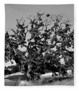 California Roadside Tree - Black And White Fleece Blanket
