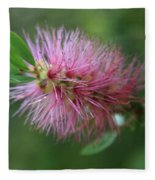 Callistemon Viminalis Taree Pink Weeping Bottlebrush Flowering Trees Of Hawaii Fleece Blanket