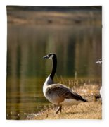 Canada Geese In Golden Sunlight Fleece Blanket
