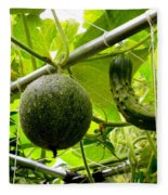 Cantaloupe And Hanging On Tree 1 Fleece Blanket