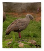 Cape Barren Geese Facing Right Fleece Blanket