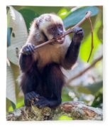 Capuchin Monkey Chewing On A Stick Fleece Blanket