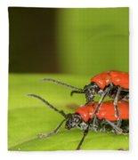 Cardinal Beetle  Fleece Blanket