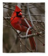 Cardinal In Spring Fleece Blanket