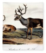 Caribou (rangifer Caribou): Fleece Blanket