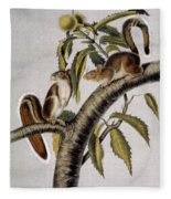 Carolina Grey Squirrel Fleece Blanket