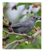Catbird Scores A Mulberry Fleece Blanket