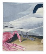 Cayenne Tern Fleece Blanket