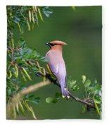 Cedar Waxwing 1 Fleece Blanket