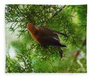 Cedar Waxwing Beauties 1 Fleece Blanket