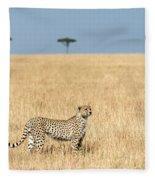 Cheetah Acinonyx Jubatus In Plains Fleece Blanket