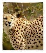Cheetah Portrait Fleece Blanket
