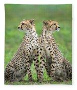 Cheetahs Acinonyx Jubatus In Forest Fleece Blanket