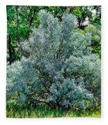 Cherry Creek Trail Study 2 Fleece Blanket