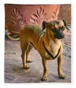 Chihuahua - Dogs Fleece Blanket