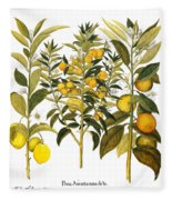 Citron And Orange, 1613 Fleece Blanket